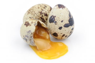 Does protein = better egg quality?